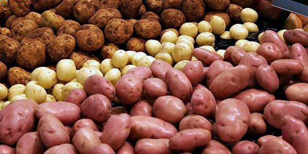 «Золотой» картофель