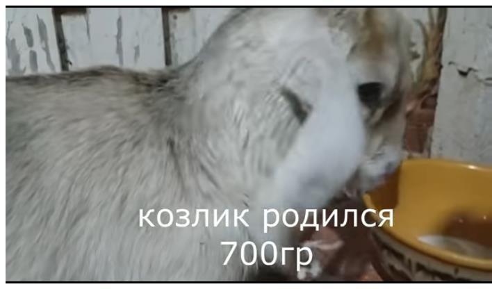 Джерсийская
