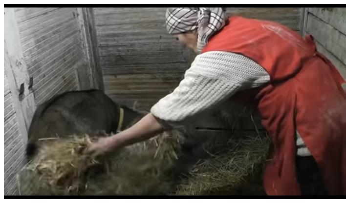 руками корова